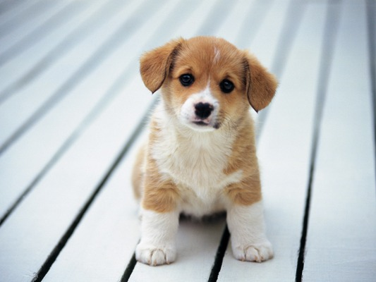How-To-Make-Your-Puppy-Gain-Weight